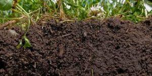 فواید مواد آلی در خاک
