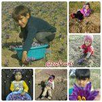 تصاویر منتخب زعفران 4