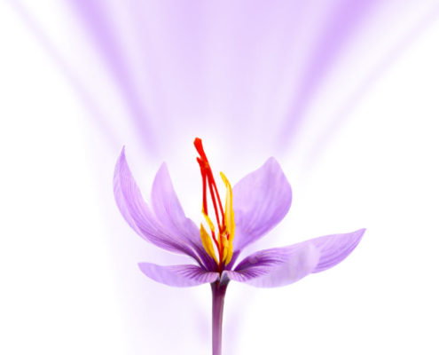 Saffron of Mashhad Holy