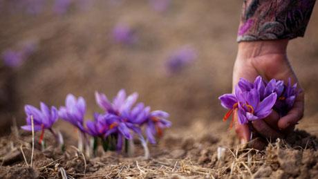 The best way to hold saffron