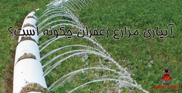 آبیاری مزارع زعفران چگونه است؟