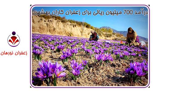 درآمد 700 میلیون ریالی برای زعفران کاران بهشهری