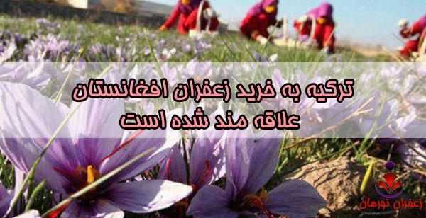 ترکیه به خرید زعفران افغانستان علاقه مند شده است