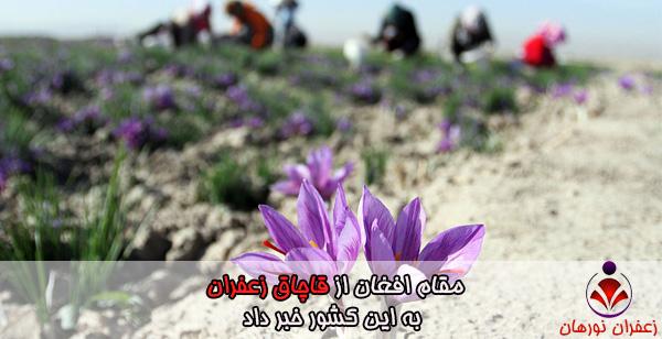 مقام افغان از قاچاق زعفران به این کشور خبر داد
