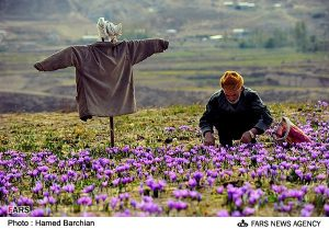 Things we need to know about saffron