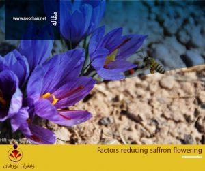 Factors reducing saffron flowering