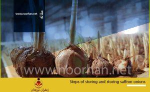 Steps of storing saffron bulbs